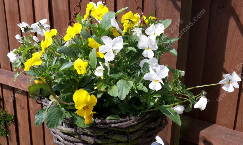 The hanging baskets are thriving too